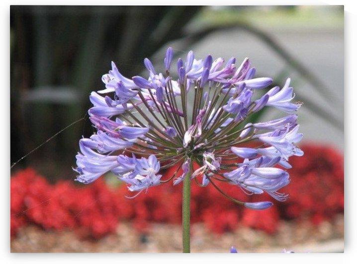 Flower in Ojai VP2 by Vicki Polin