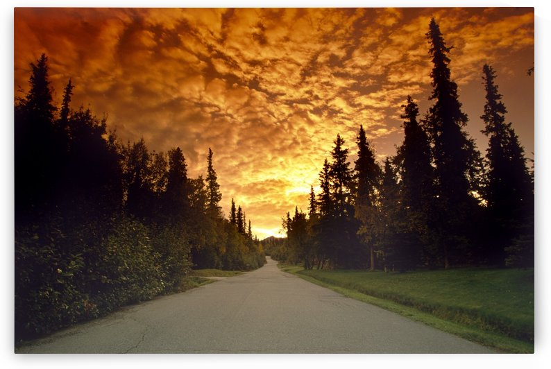 Road Into Sunset by Printscapes