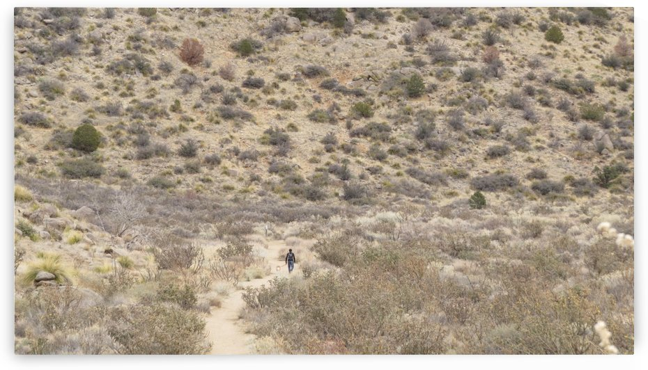 Hiking in the Sandia Mountains by Vicki Polin