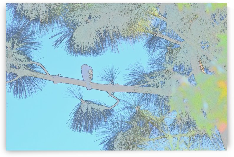 Red Shouldered Hawk in Large Pine Abstract 2 by Linda Brody