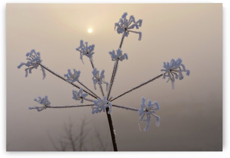 Foggy weed by Andy Jamieson