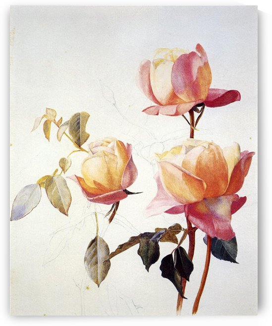 Florentine Roses by Henry Roderick Newman