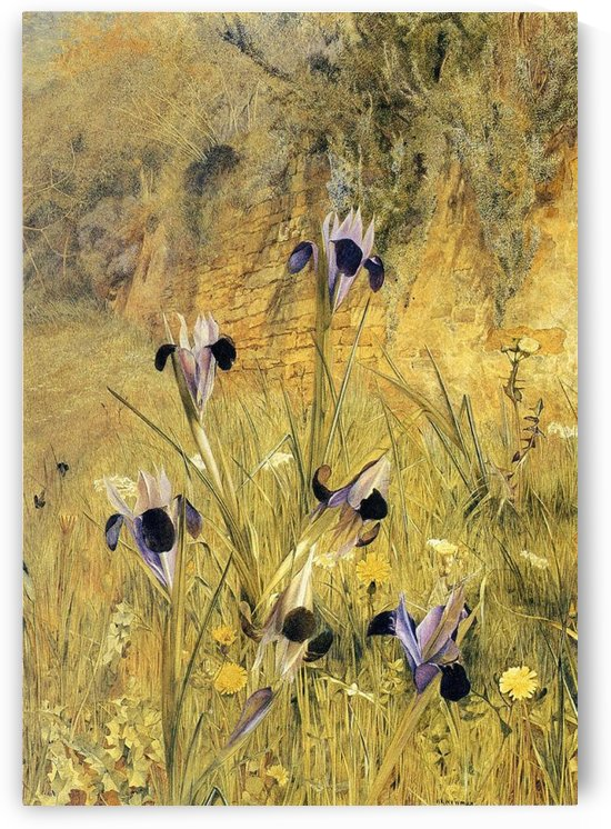 A few purple flowers by Henry Roderick Newman