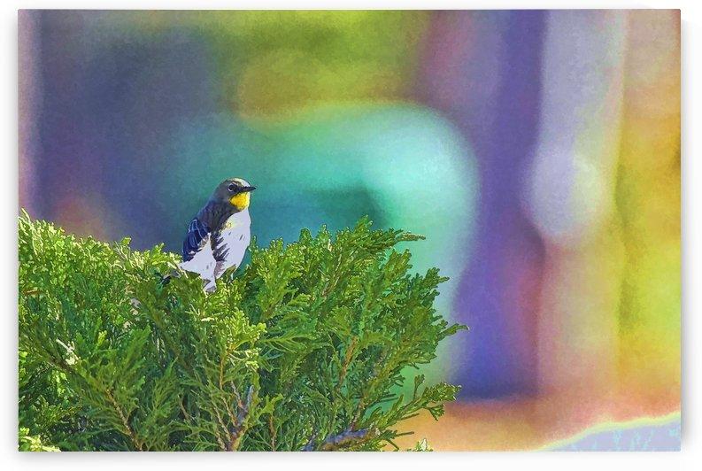 Yellow Warbler Sitting on Green Bush by Linda Brody