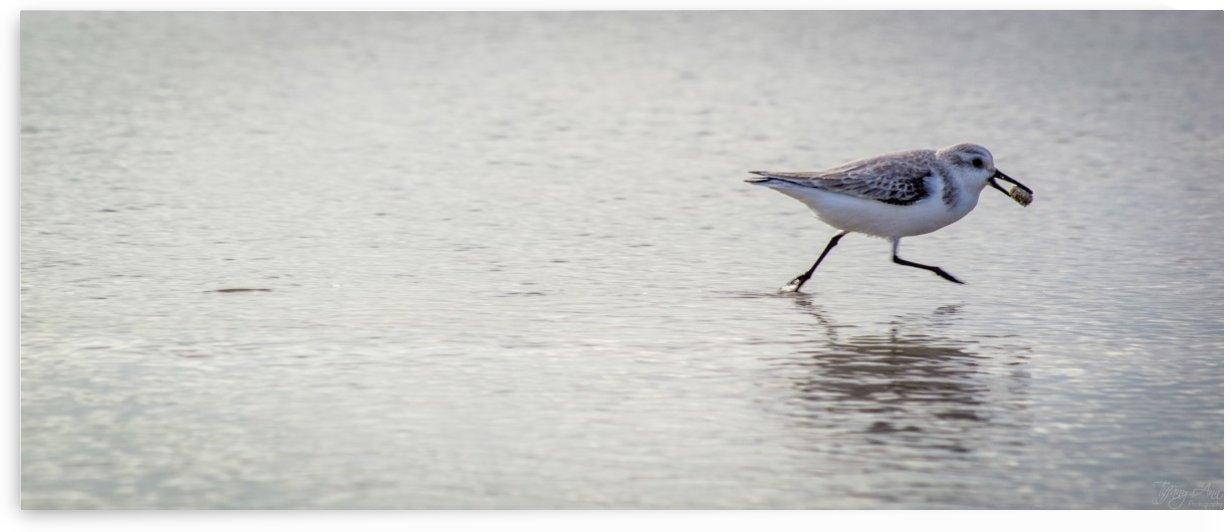 Bird III by Tiffany Ross