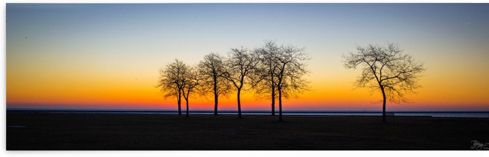 Trees III by Tiffany Ross