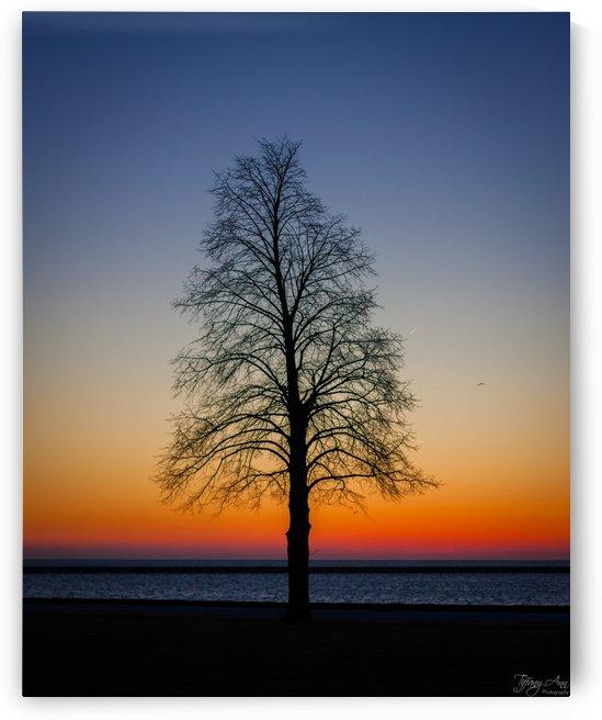 Trees IV by Tiffany Ross