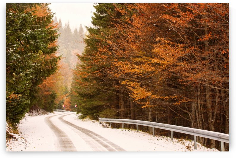 Autumn season in the middle of forest with colourful leaves by MIRICA DAN-ALEXANDRU