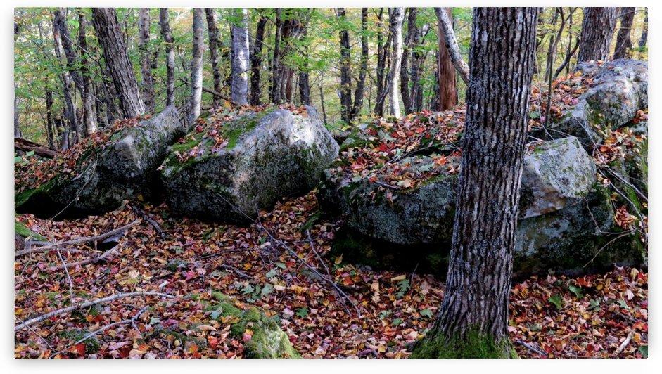 Rocky ridge, Mount Pisgah, Penobsquis, NB, Oct. 6, 2013 by Doug McQuinn