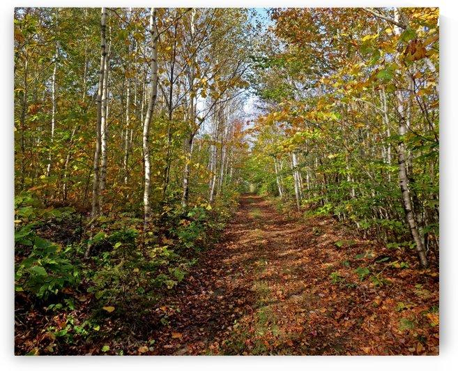 Fall foliage, Mount Pisgah, New Brunswick, Oct. 6, 2013 by Doug McQuinn