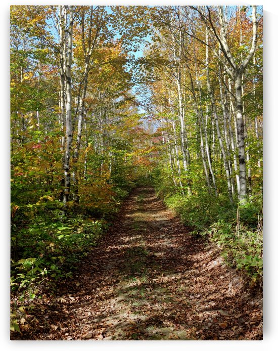 Fall foliage, Mount Pisgah, NB, Oct. 6, 2013 by Doug McQuinn