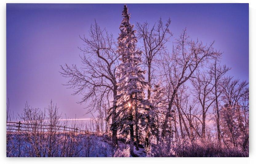 Sunny Winter Scenery by Lisa Poirier