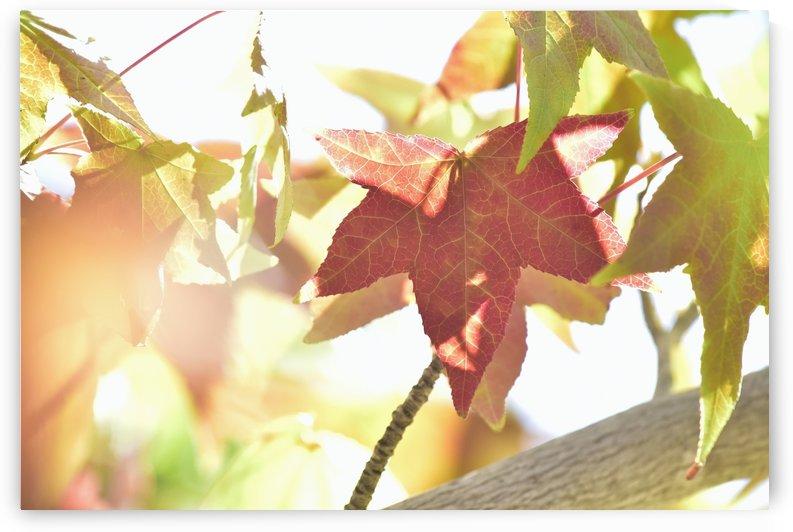 Leaves Macro 1  by Linda Brody