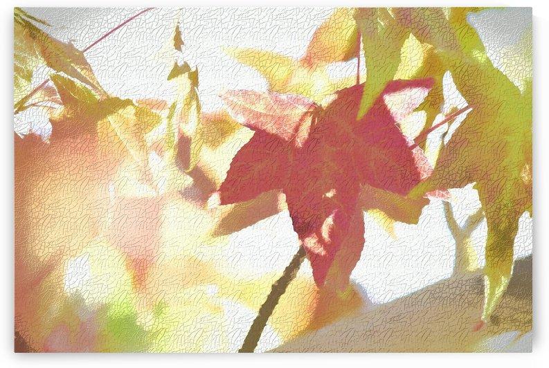 Leaves Macro 1 Abstract 2  by Linda Brody