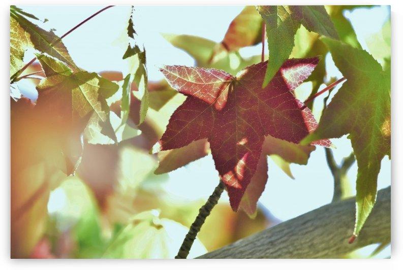 Leaves Macro 1 Abstract 3  by Linda Brody