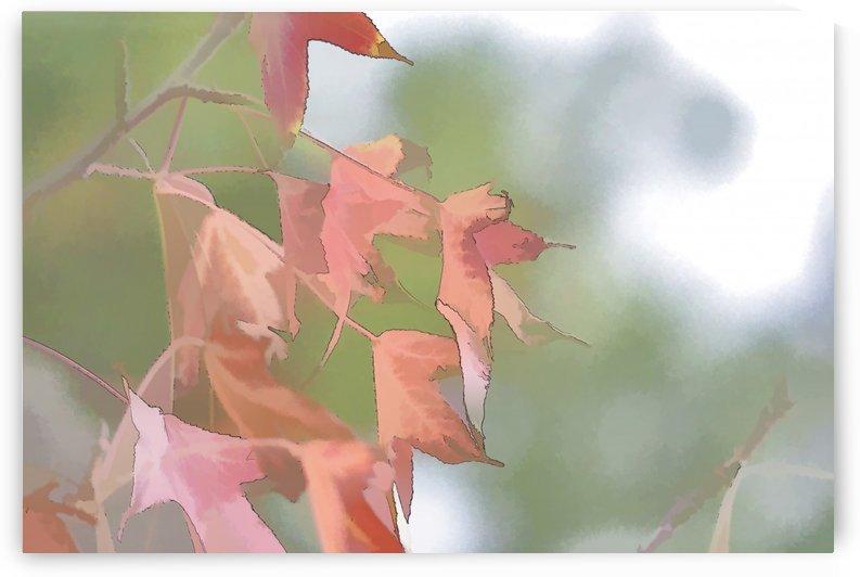 Leaves Macro 2 Abstract 1 by Linda Brody