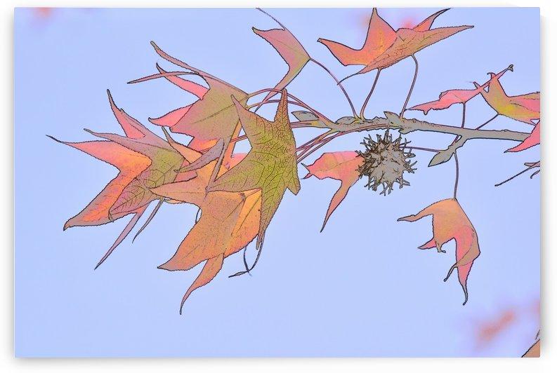 Leaves Macro 3 Abstract by Linda Brody