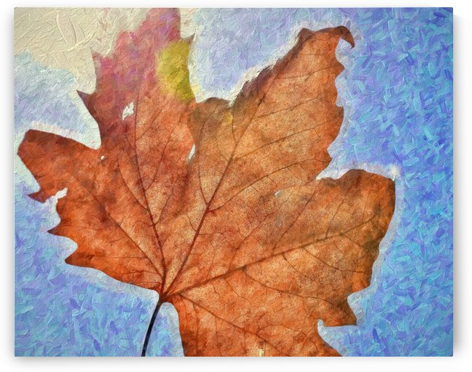 Autumn Leaves Macro 3 Abstract 3 by Linda Brody