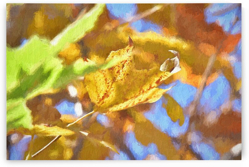 Autumn Leaves Macro 4 Abstract 2 by Linda Brody