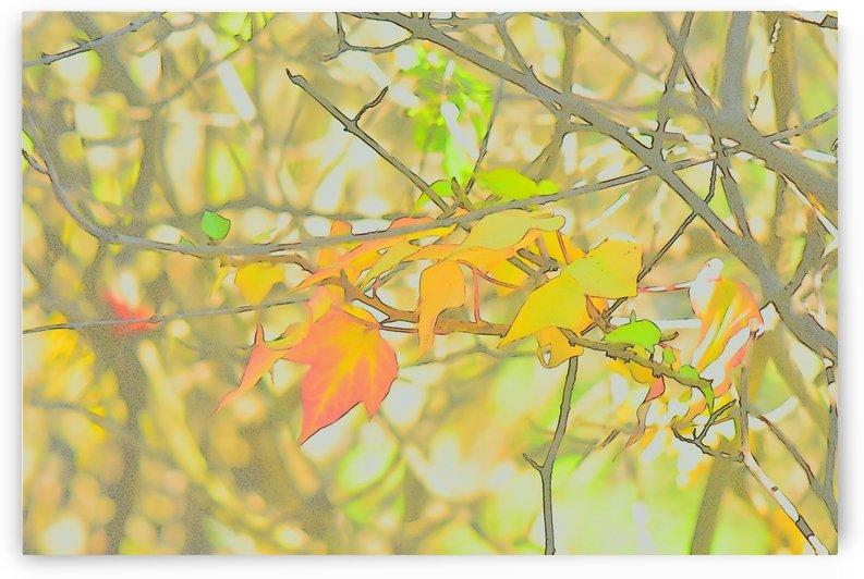 Leaves Macro 5 Abstract 3 by Linda Brody