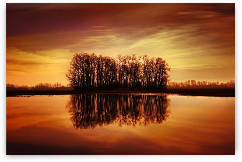 Silhouetted Trees Reflected On Water by PacificStock