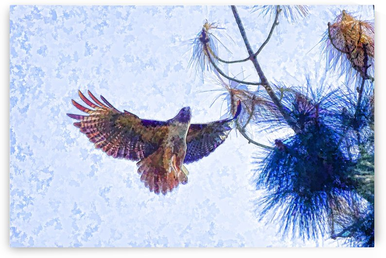 Red Shouldered Hawk Abstract 1 by Linda Brody