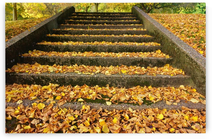 Autumnal steps by Andy Jamieson