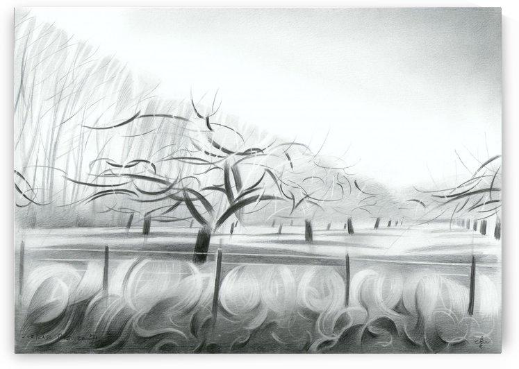Zoelen Forest - 04 02 17 by Corné Akkers