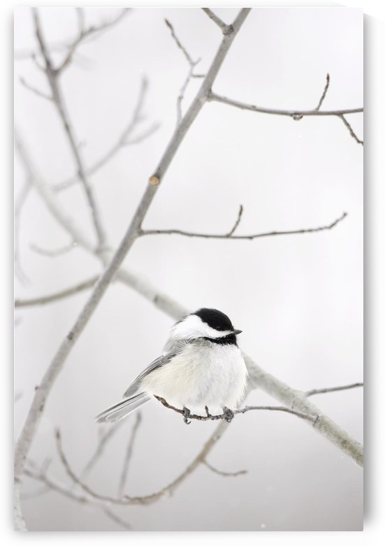 Bird On A Branch by PacificStock