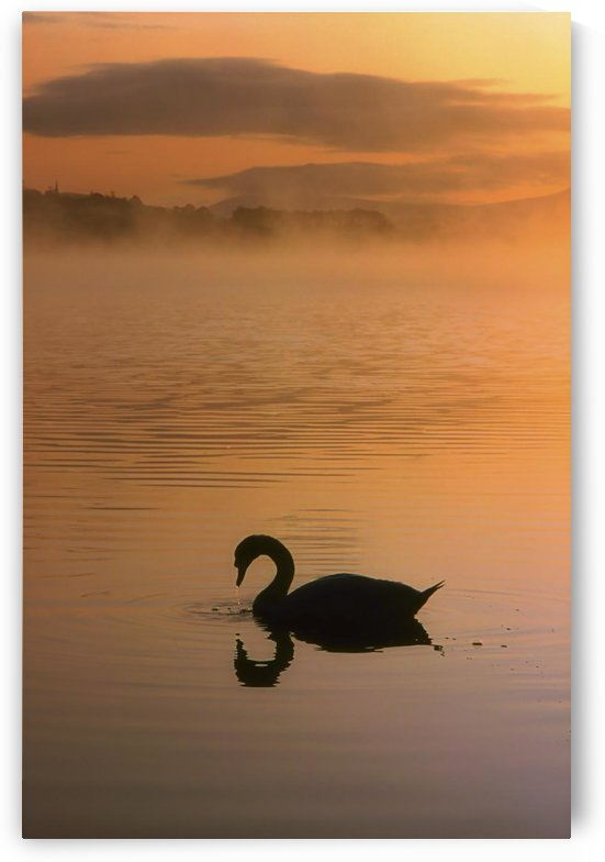 Lough Leane, Lakes Of Killarney, Co Kerry, Ireland; Silhouetted Swan by PacificStock
