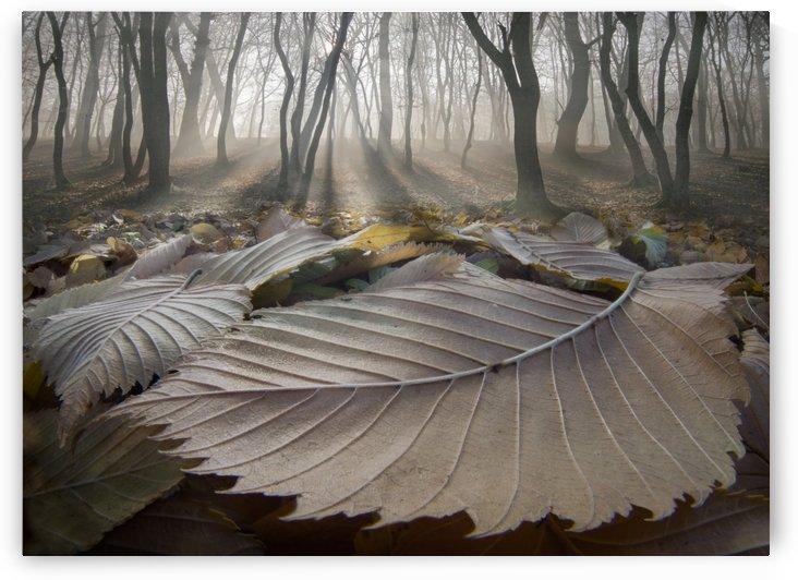 The Fallen Ones by Adrian Borda