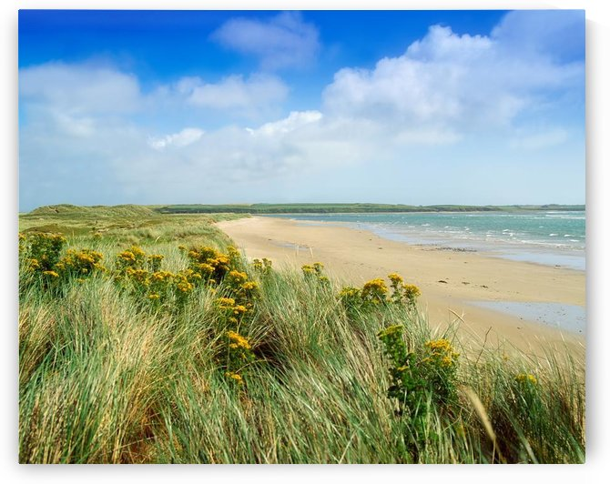 Sandunes At Fethard, Co Wexford, Ireland by PacificStock