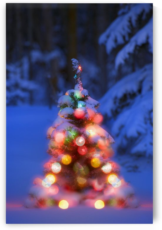 Illuminated Christmas Tree In A Forest by PacificStock