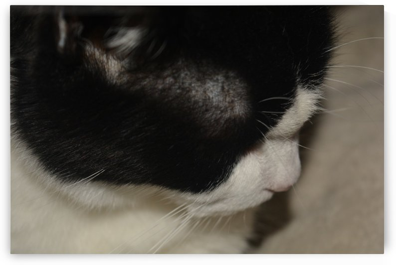 Black and white cat by Cassandra Lewis