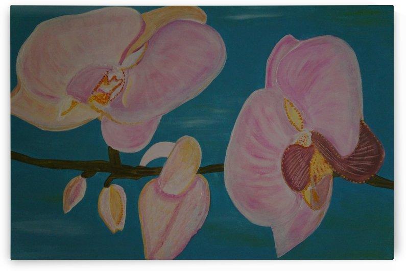 orchid by Babetts Bildergalerie