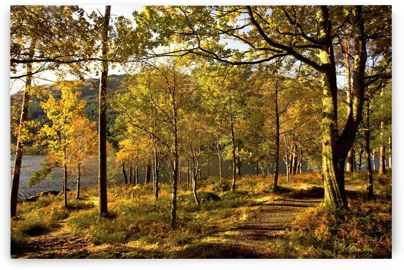 Argyll And Bute, Scotland; Path Through Autumn Woods by PacificStock