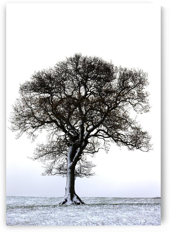 Lone Tree In Field by PacificStock
