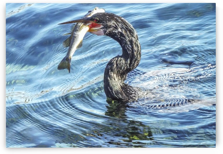 The Early Bird Catches the Fish by Melody Rossi