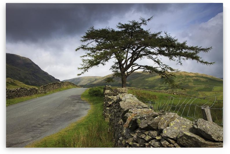 A Stone Fence Running Along A Road; Lake District, Cumbria, England by PacificStock
