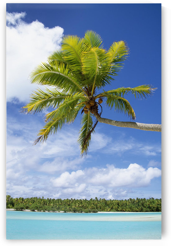 Palm Tree And Beach, Aitutaki by PacificStock