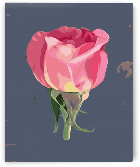 pink rose with grey background by TimmyLA