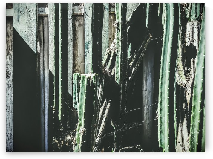 green cactus with white and green wood background by TimmyLA