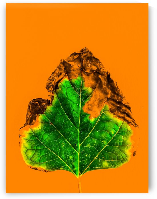 burning green leaf texture with orange background by TimmyLA