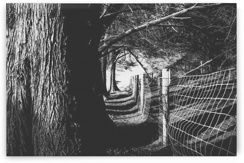 trees in the forest with shadow and sunlight in black and white by TimmyLA