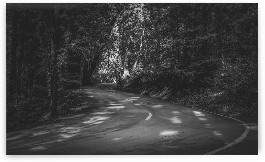 Road to nature on Highway 1, California, USA in black and white by TimmyLA