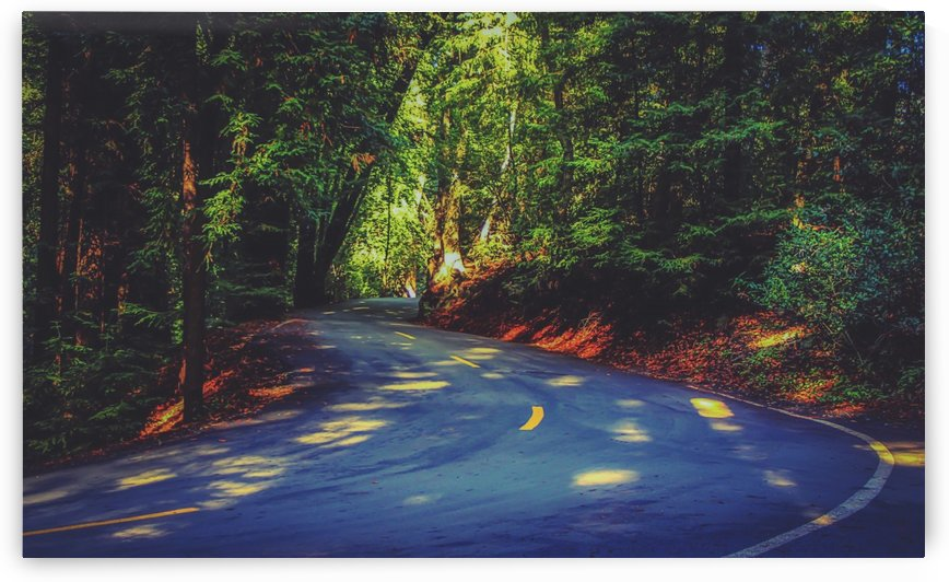 Road to nature on Highway 1, California, USA by TimmyLA