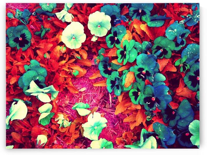 mwc garden flowers one by Chazzi R  Davis