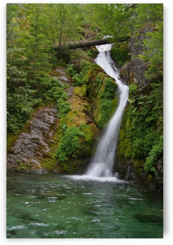 Full view of Sullivan Falls in the Opal Creek Wilderness, Oregon by Craig Nowell Stott