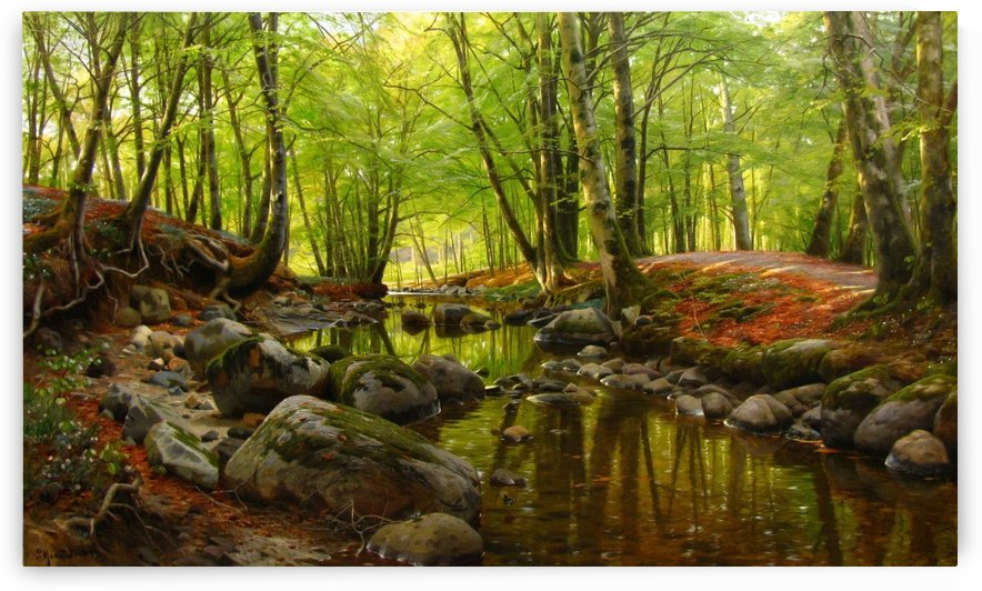 Springday in the forest near a stream with Beeches and Anemones in bloom by Peter Mork Monsted