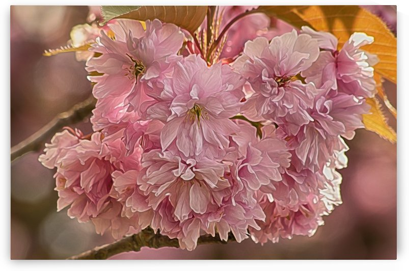Pretty in Pink  by Naturally Scenic Images
